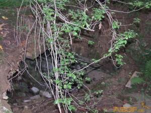 neandertal2012-03