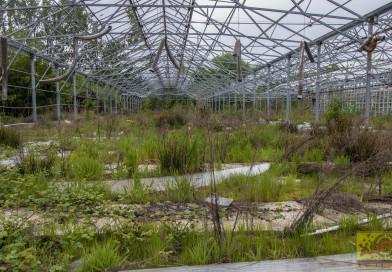 Die ausgebrannte Gärtnerei