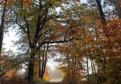 Herbstspaziergang im Forst